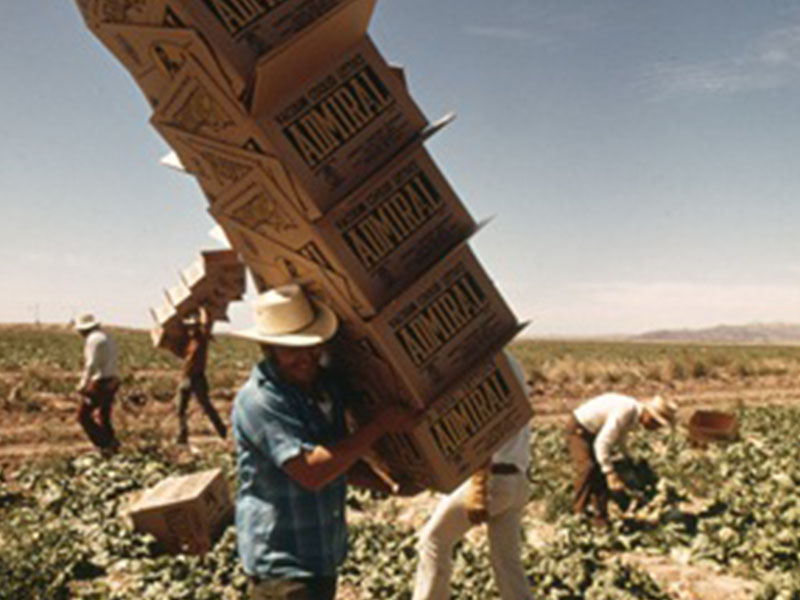 Mexican Farm Workers